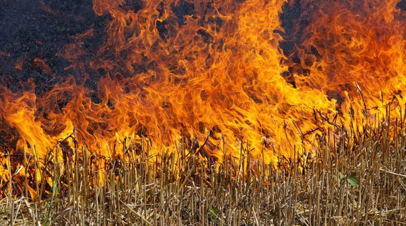 В Каменске горят поля (ВИДЕО)